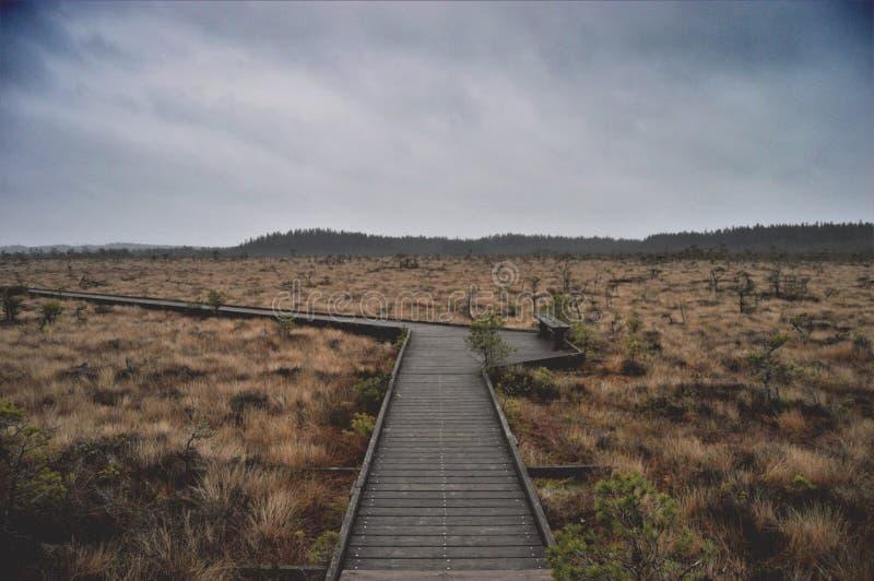 Daylight, Forest, Landscape Free Public Domain Cc0 Image