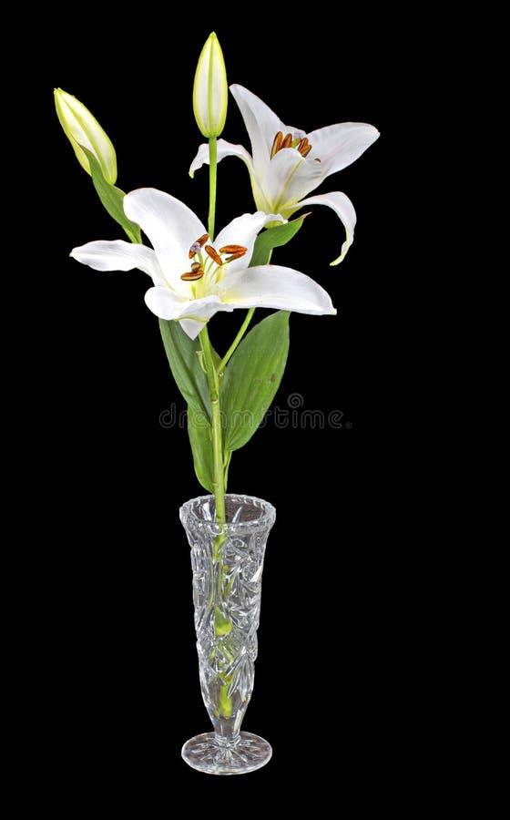 Download Daylily arkivfoto. Bild av closeup, härlig, blom, blomma - 27288532