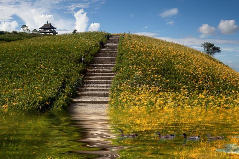 Daylily flower at sixty stone mountatin royalty free stock images