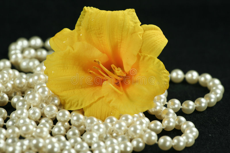 Daylily mit Perlen stockbilder