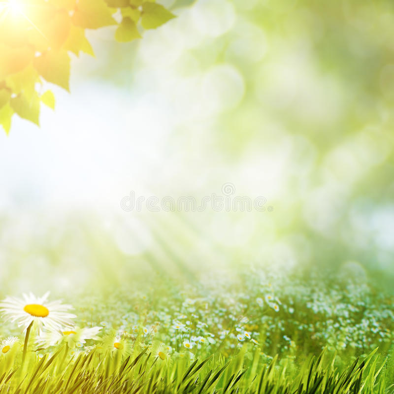 Free Daytime Haze In The Forest Royalty Free Stock Photo - 51861085