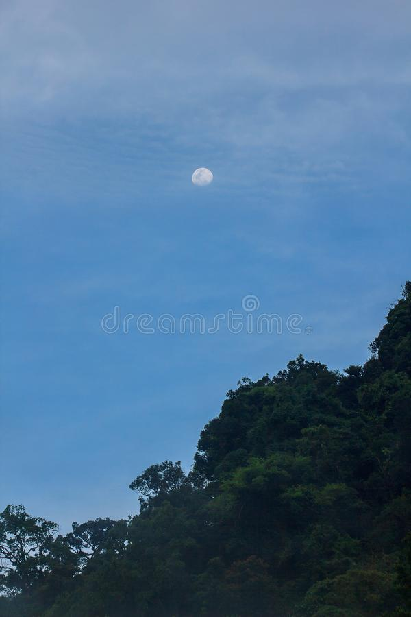 The daytime moon above the tall tree. In the forest royalty free stock images