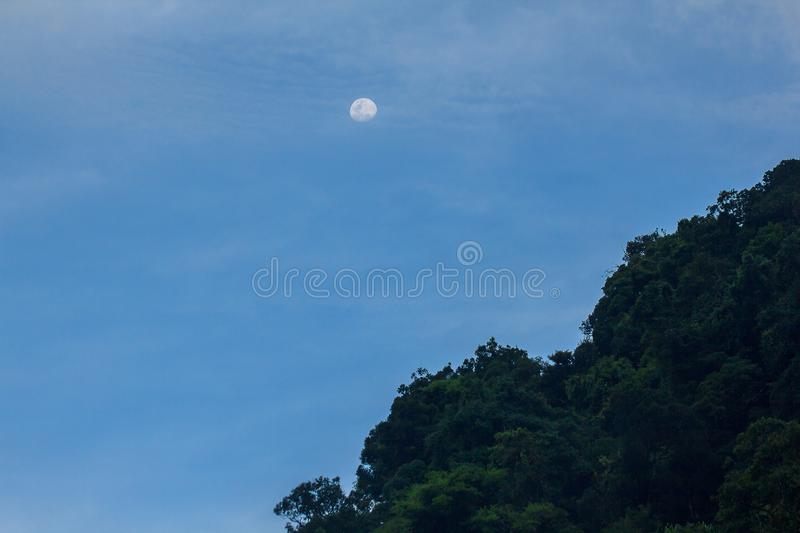 The daytime moon above the tall tree. In the forest royalty free stock photo