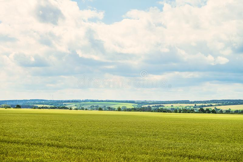 Daytime summer countryside landscape with a green young wheat field under a cloudy sky. Cereal field and green hills on the horizon. Belgorod region, Russia stock image