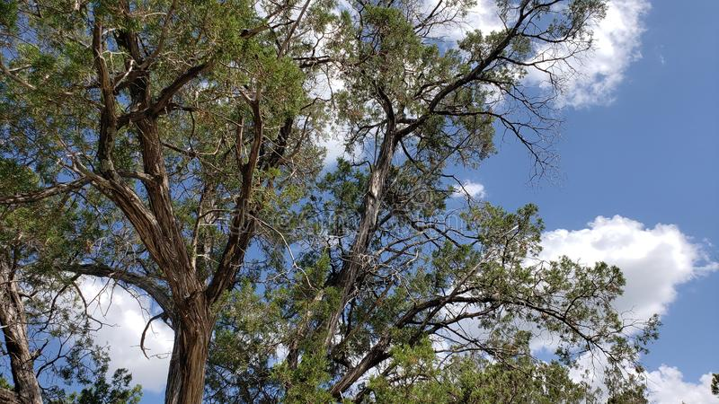 Daytime viewing of the tree tops. Under cloudy blue sky royalty free stock photography