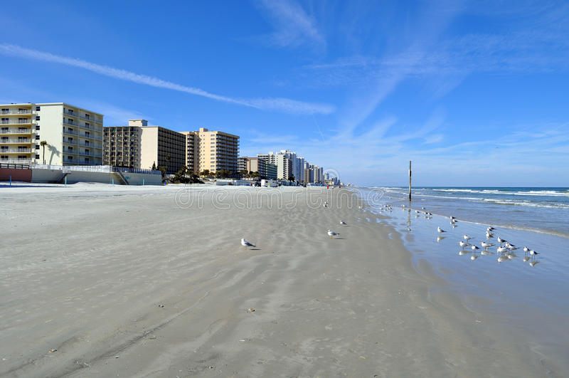 Download Daytona Beach stock photo. Image of beach, ocean, birds - 18262828