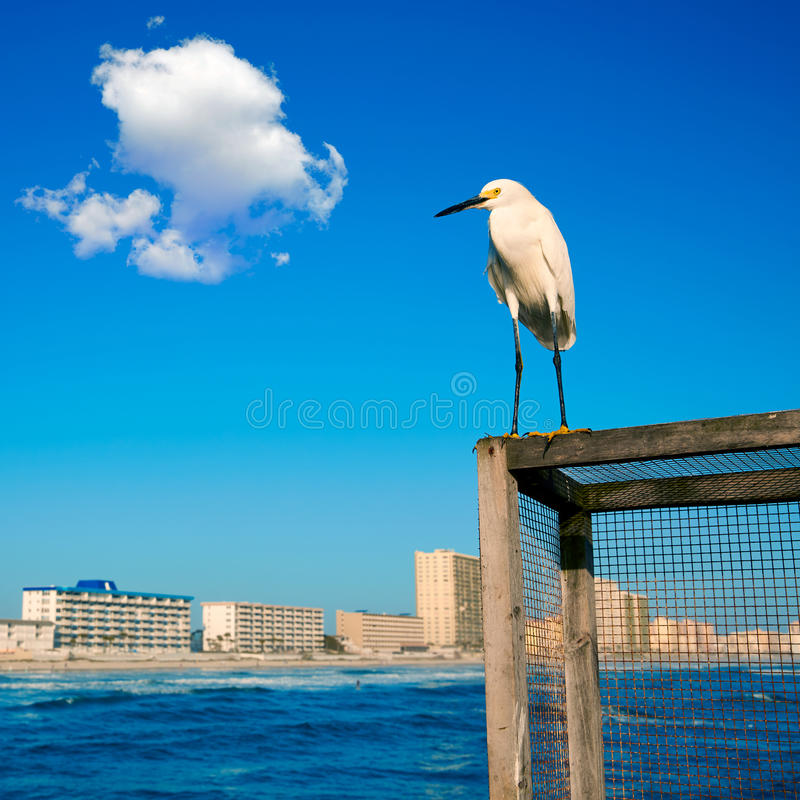 Daytona plaża w Floryda od mola USA obraz stock