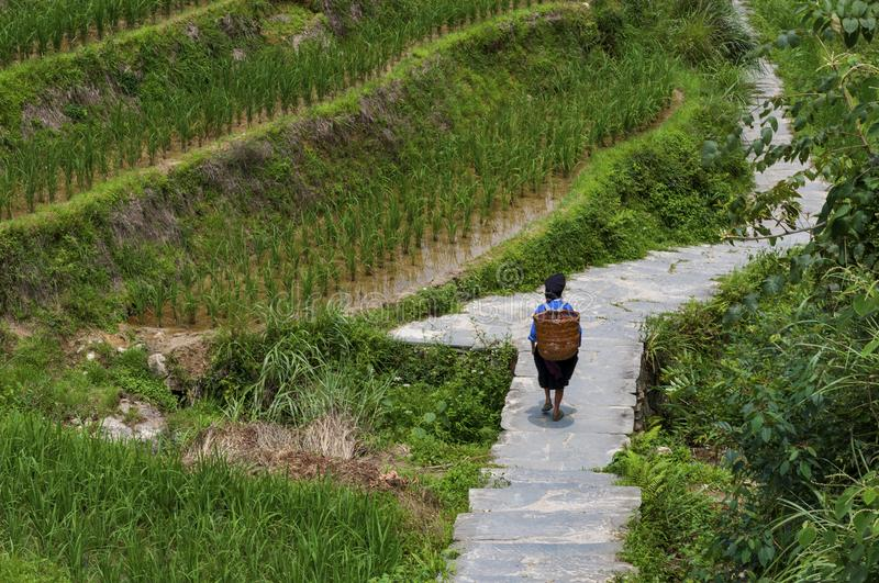Local farmer carrying a basket at her back along a rice terraced field near the village of Dazhai in China stock images