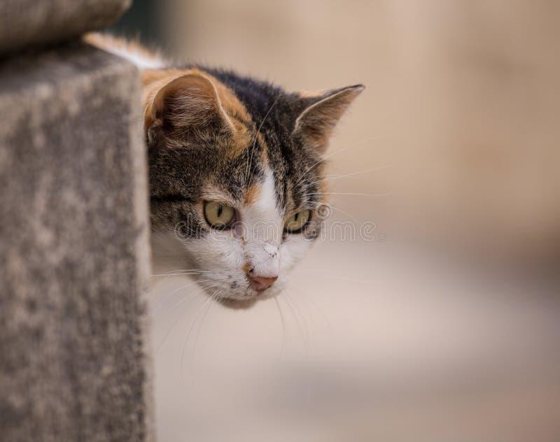 Download Dcat Siedzi Na ścianie Outdoors Obraz Stock - Obraz złożonej z kamera, plenerowy: 57655899