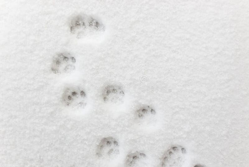¡ De Ð aux empreintes de pas dans la neige photo libre de droits