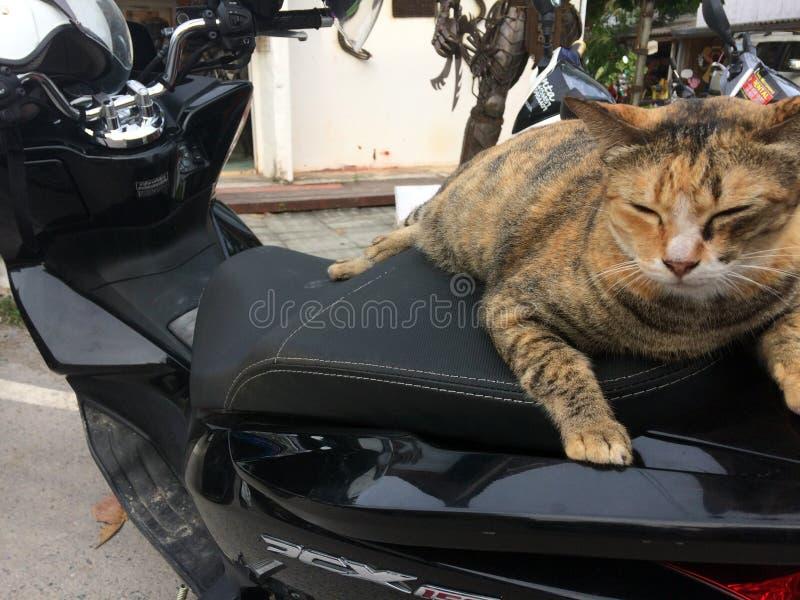 ¡De Ð en la motocicleta fotografía de archivo libre de regalías