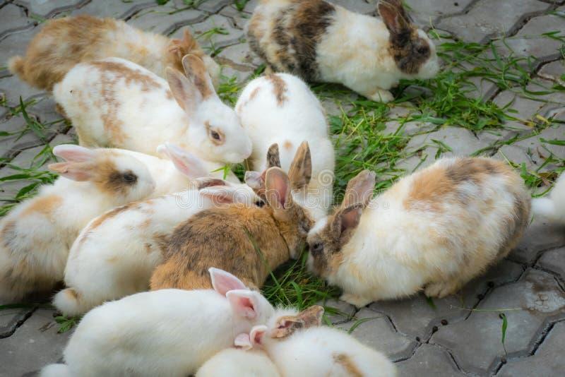 De aanbiddelijke konijnen eten grassen op grond stock afbeelding