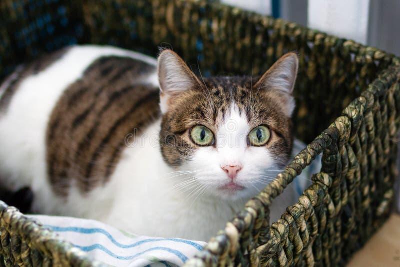 De aanbiddelijke witte gestreepte katkat met groene ogen ligt in kattenbed dichtbij aan verwarmer en onderzoekt de camera royalty-vrije stock afbeelding