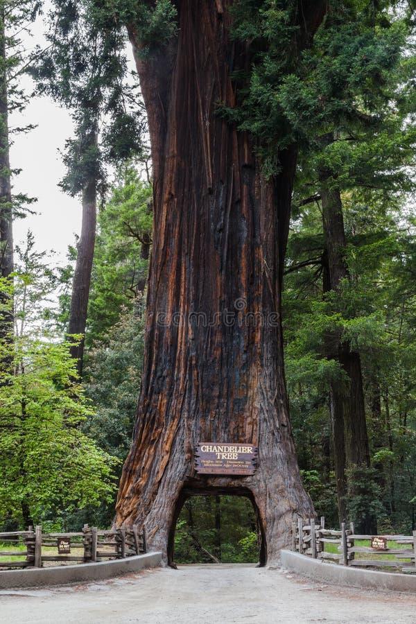 De Aandrijving van de Chandalierboom door Boom royalty-vrije stock foto