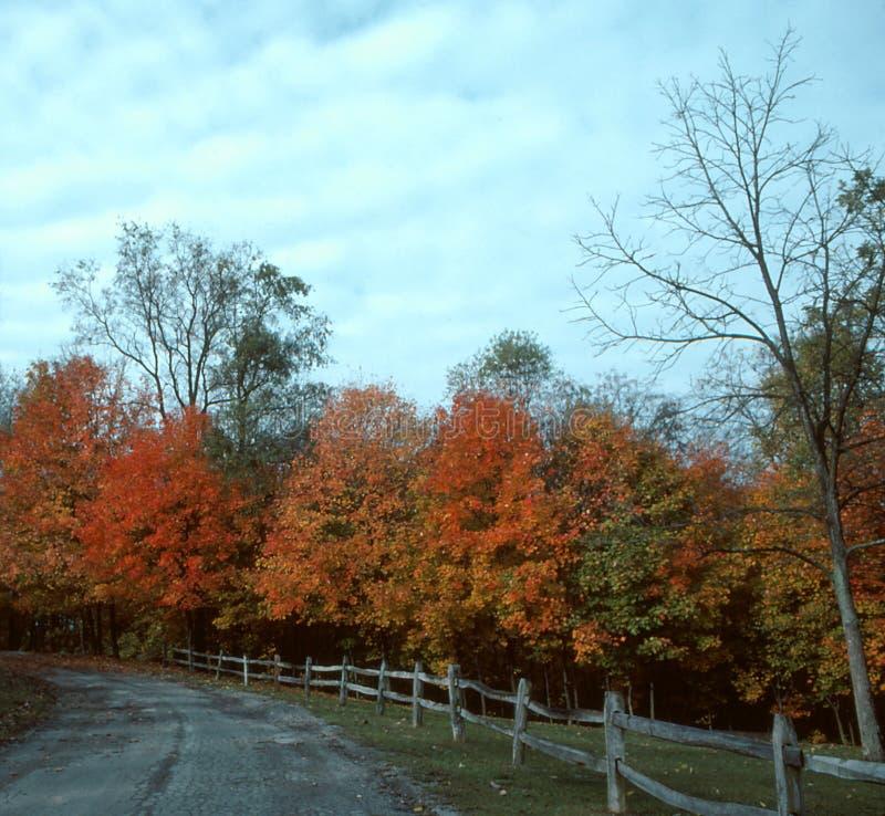 Download De Aandrijving Van De Herfst--1 Stock Afbeelding - Afbeelding bestaande uit boom, blad: 295667