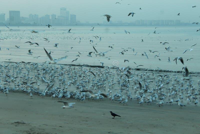 De aandrijvingsvogels van Marin stock afbeelding