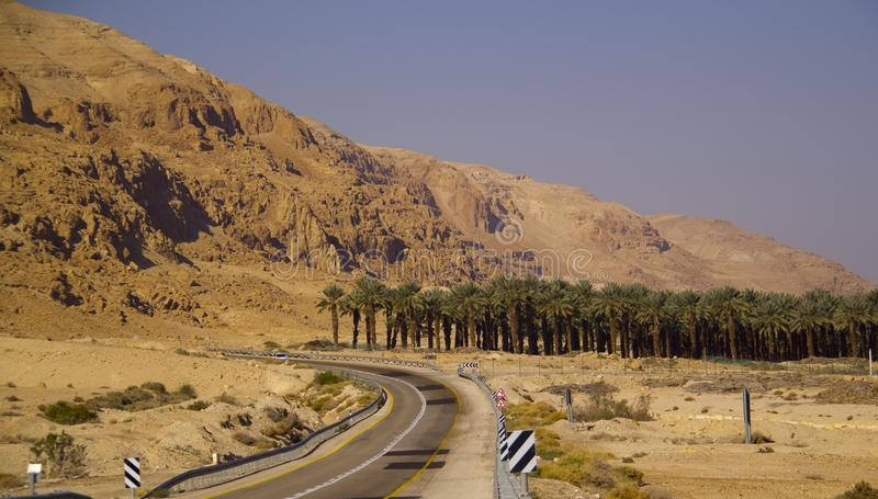 De aanplanting van de dadelpalmen in de woestijn dichtbij het Dode Overzees, is stock afbeelding