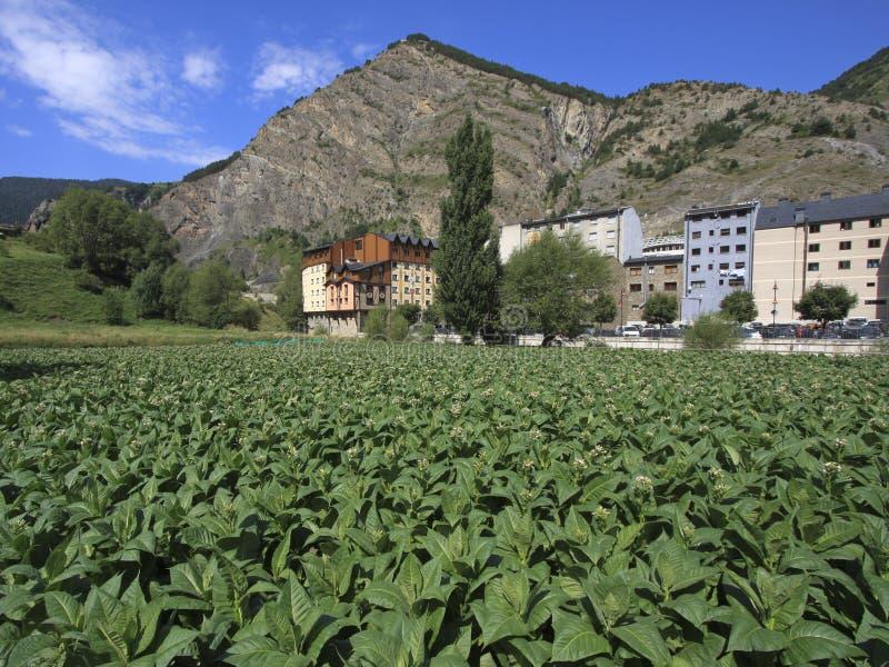 De aanplanting van de tabak in Andorra royalty-vrije stock afbeelding