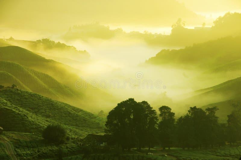 De Aanplantingen van de thee royalty-vrije stock fotografie