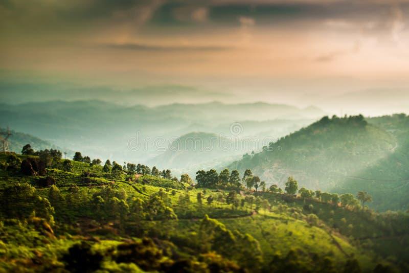 De aanplantingen van de thee in India (de lens van de schuine standverschuiving) royalty-vrije stock fotografie
