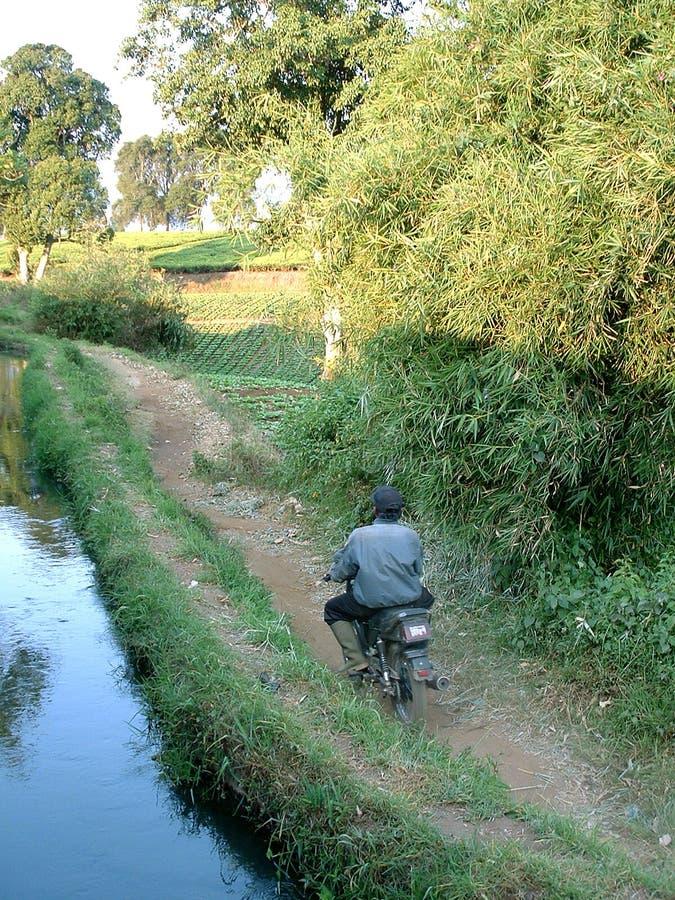 Download De Aanplantingsarbeider Van De Thee Stock Afbeelding - Afbeelding bestaande uit thee, export: 32435