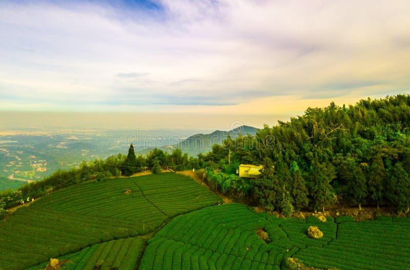 De aanplantingslandschap van de thee stock foto
