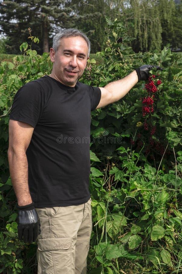 De aantrekkelijke mens glimlacht en houdt rode aalbessen royalty-vrije stock foto