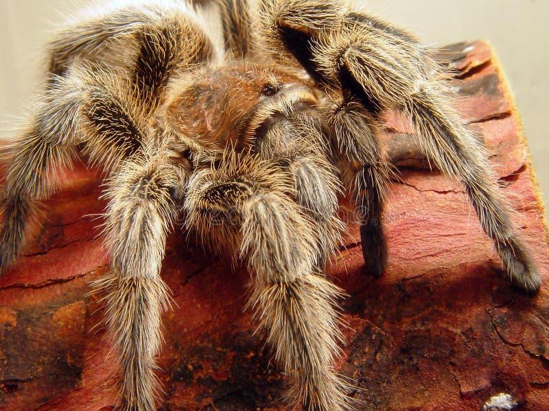 Download De Aanval van de spin stock foto. Afbeelding bestaande uit vrees - 47164