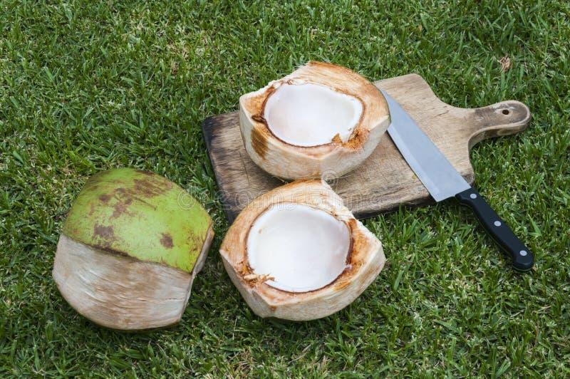 De aanvang van een verse kokosnoot stock foto's
