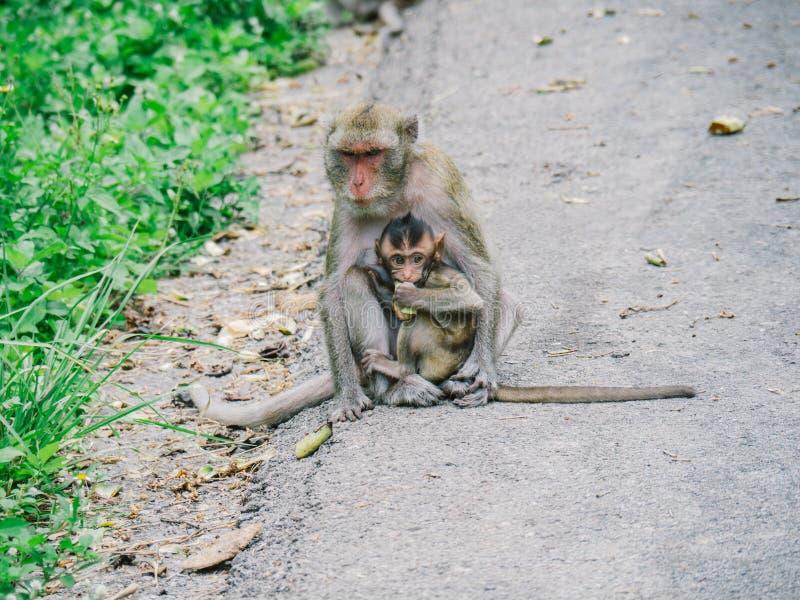 De aap, het mamma en de baby zitten op de weg royalty-vrije stock fotografie