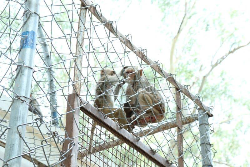 De aap is slimme sociale dieren stock afbeeldingen