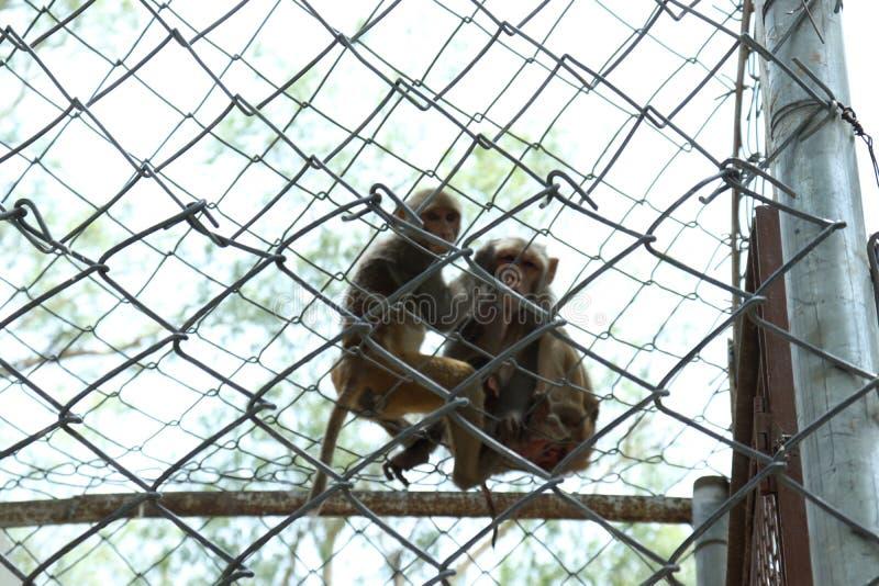 De aap is slimme sociale dieren stock foto