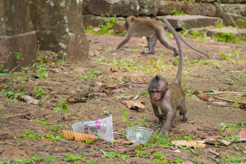 De aap van babymacaque en plastic verontreiniging stock foto's