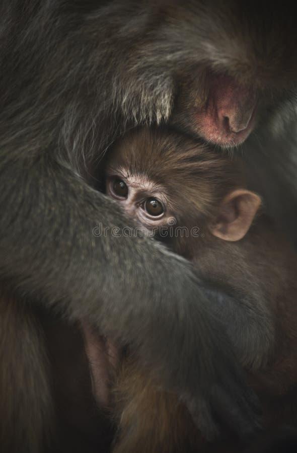 De aap van de baby royalty-vrije stock foto