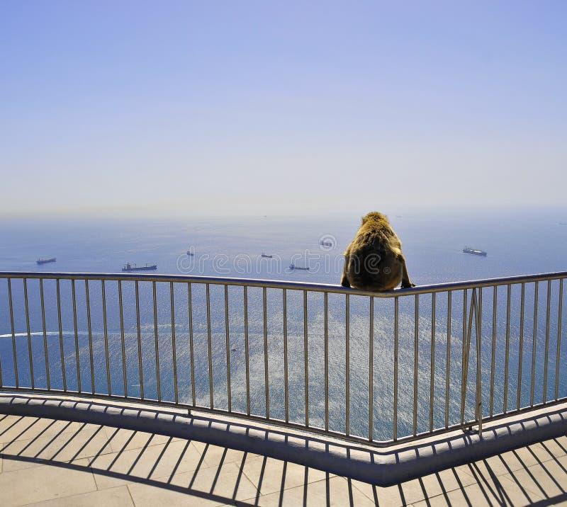 De aap van Gibraltar royalty-vrije stock afbeelding