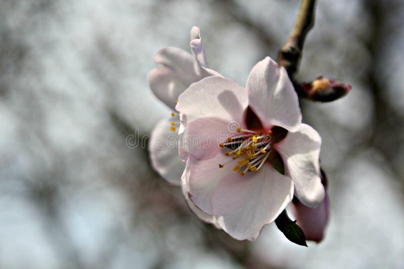 De aard mooie kleur van de bloemenflora royalty-vrije stock fotografie