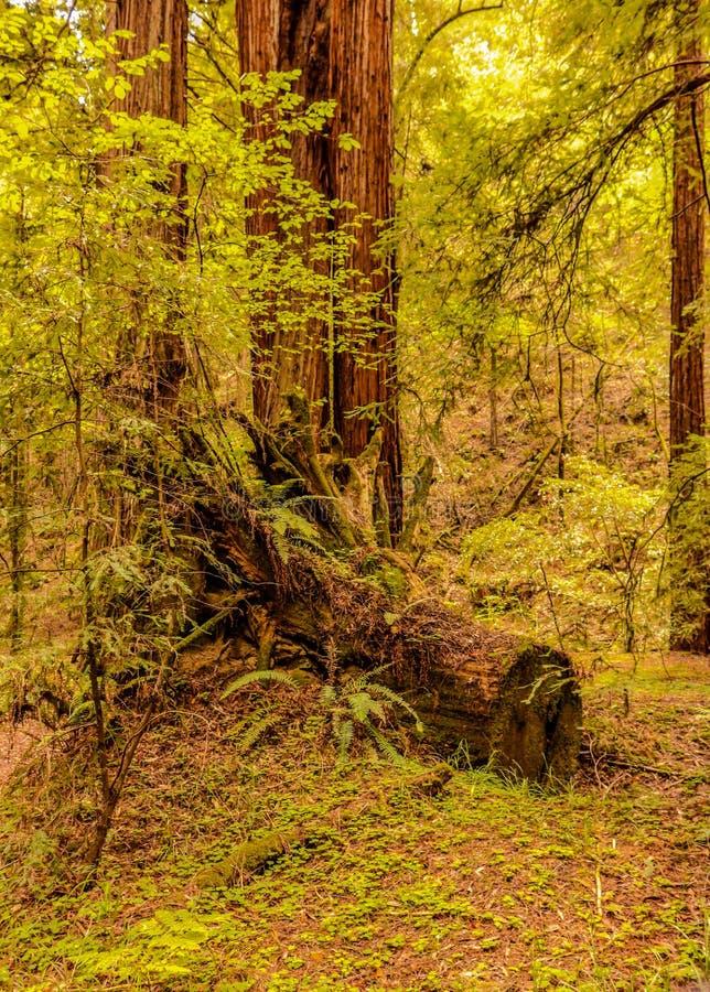 De aard neemt zijn cursus in het bos stock fotografie