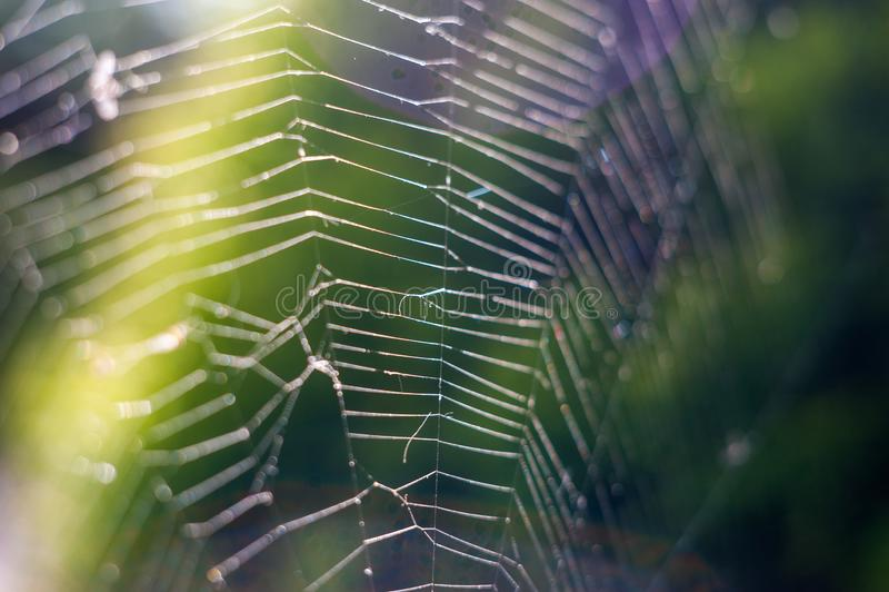 De aard, sluit omhoog van een spinneweb met de langzame motie van dauwdalingen royalty-vrije stock fotografie
