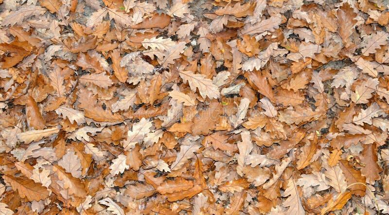 De aard van de herfst Lange schaduwen en blauwe hemel stock foto