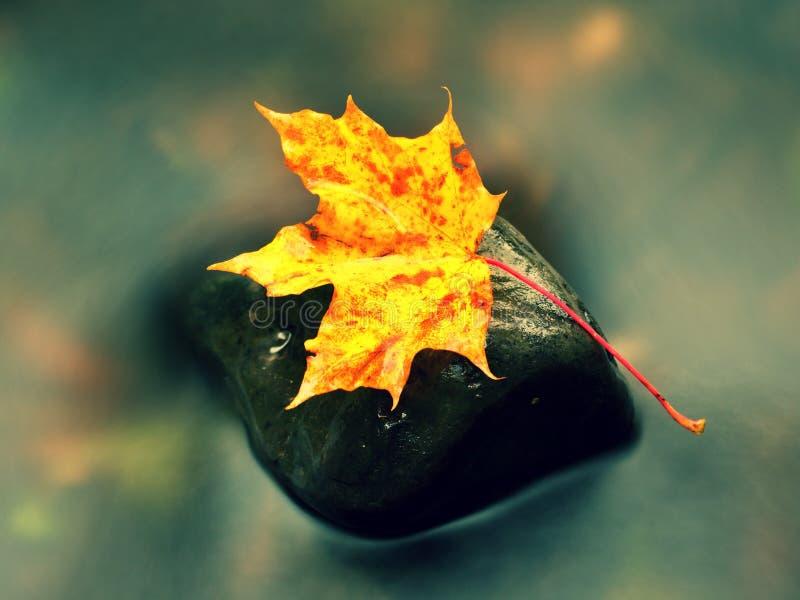 De aard van de herfst Lange schaduwen en blauwe hemel Detail van rot oranjerood esdoornblad Dalingsblad op steen royalty-vrije stock afbeeldingen