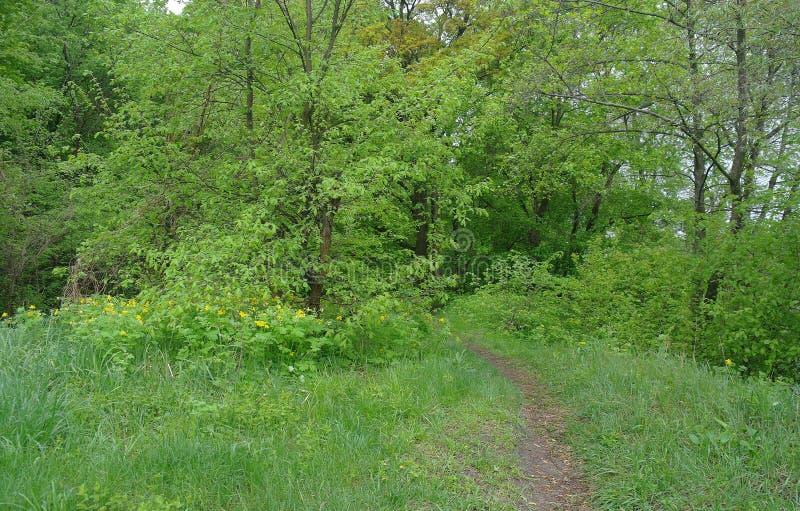 De aard van de lente Park met Groene Gras en Bomen royalty-vrije stock afbeelding