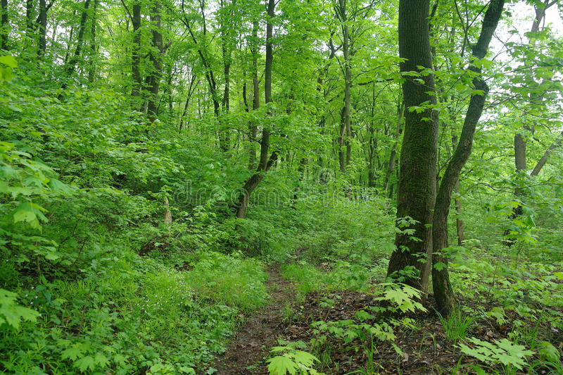 De aard van de lente Park met Groene Gras en Bomen stock fotografie