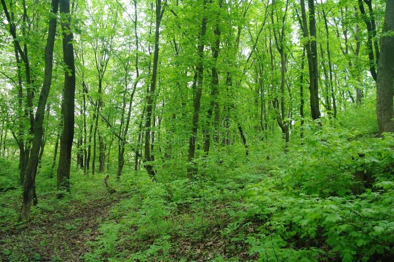 De aard van de lente Park met Groene Gras en Bomen stock foto