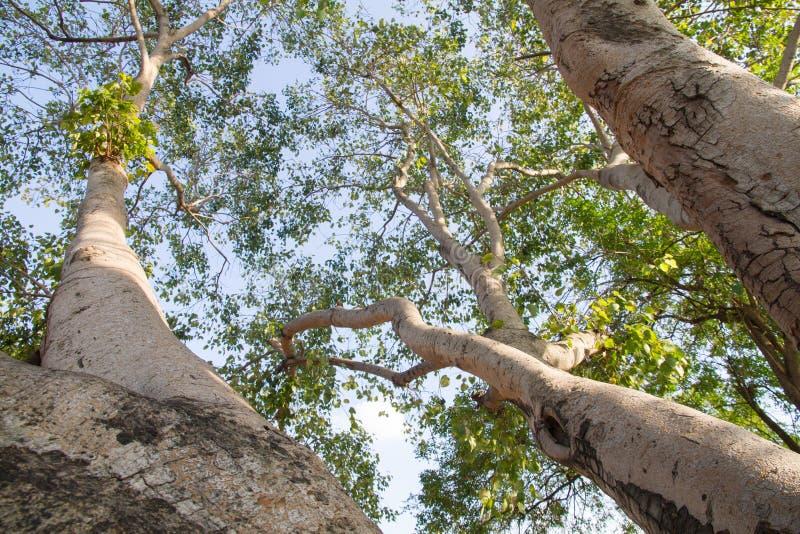 De Aard van de levensstijlboom een droom stock foto