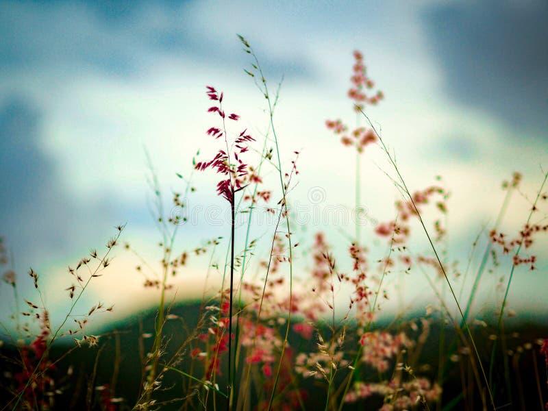 De aard van gras bloeit whith stock foto's