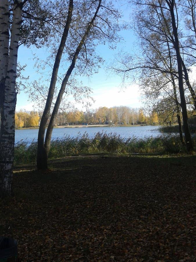 De aard van de herfst Lange schaduwen en blauwe hemel stock afbeelding