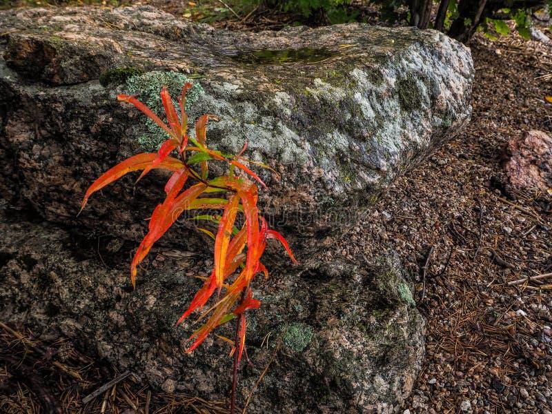 De aard van de de herfstregen Heldere de herfstbladeren royalty-vrije stock foto