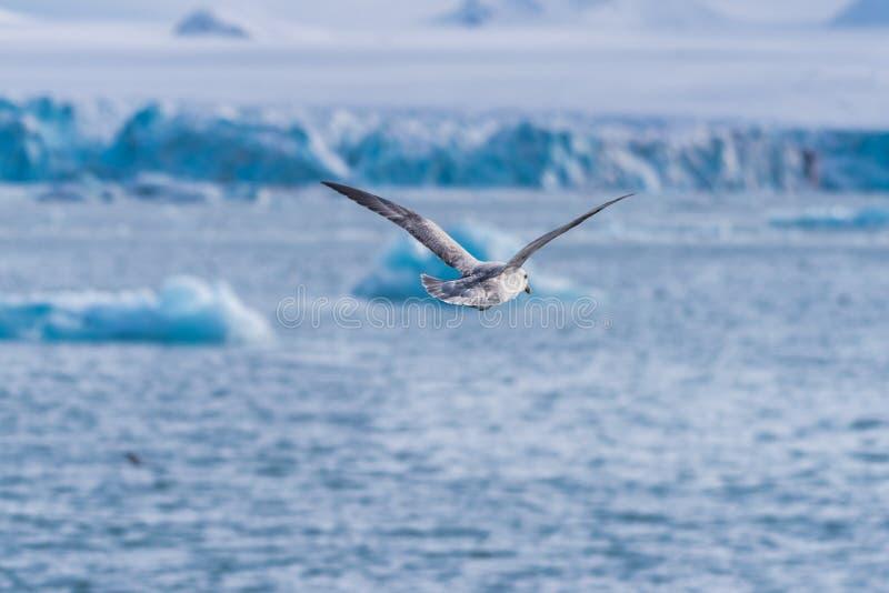 De aard van het landschapsijs van de gletsjerbergen van van de de winter polaire dag van Spitsbergen Longyearbyen Svalbard noordp stock afbeelding