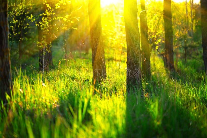 De aard van de lente Mooi landschap Park met Groene Gras en Bomen stock fotografie