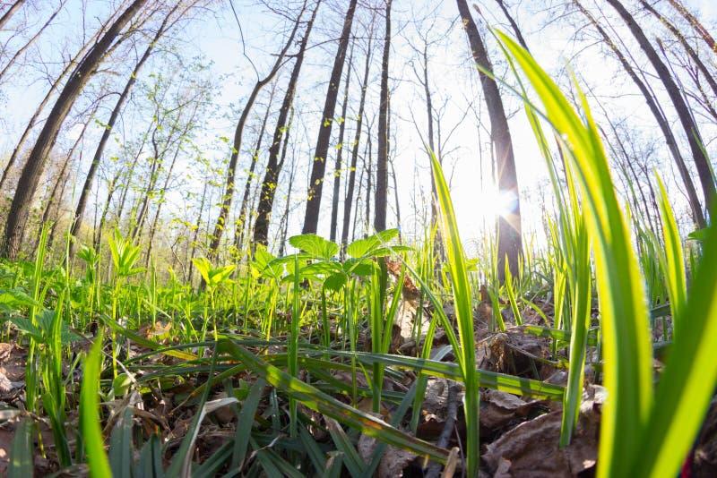 De aard van de lente Mooi landschap Park met Groene Gras en Bomen stock foto's